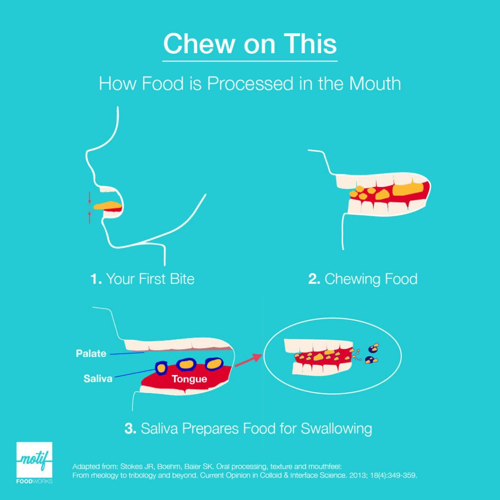 Diagram of how food is processed in the mouth, from first bite through chewing